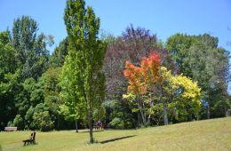 Blackheath Memorial Park
